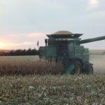 A Little Bit of Corn Harvest