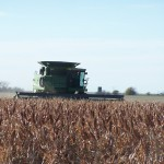 Milo Harvest