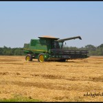 More On Wheat Harvest