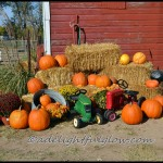 Pumpkin Patch {Hello Monday}