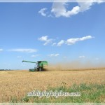 Wheat Harvest {Take 3}
