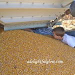 Of Cutting Corn and Corn Spills