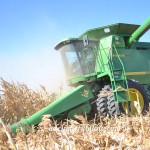 Close-up Combine, Cutting Corn