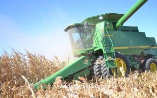 Close-up Combine, Cutting Corn