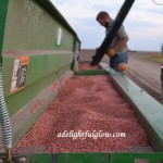 In Which There Is Wheat Drilling