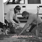 Planting Boxwoods