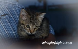 Cats and Kittens of 2014