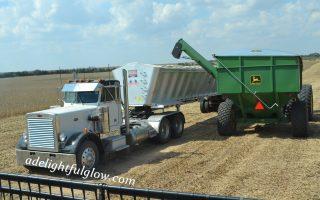 We Cut Soybeans 2014 {Part 3}