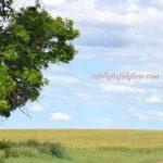 Memoir Monday {No. 73} and the June Flexi 2015