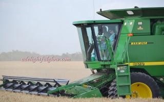 Harvest 2015 Begins