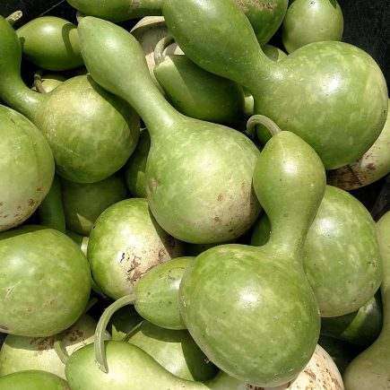 green-gourds