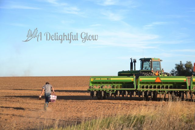 drilling-the-wheat-2016-3