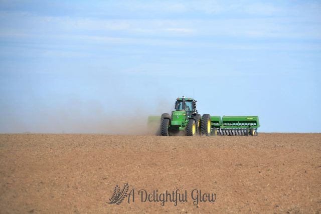 drilling-the-wheat-2016-8