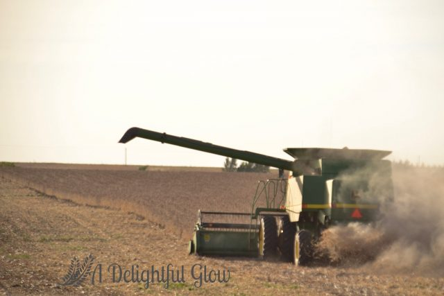 soybean-harvest-2016-15