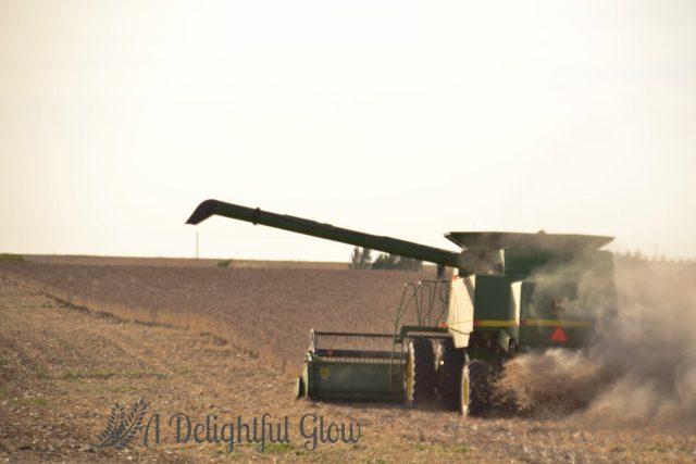 soybean-harvest-2016-15