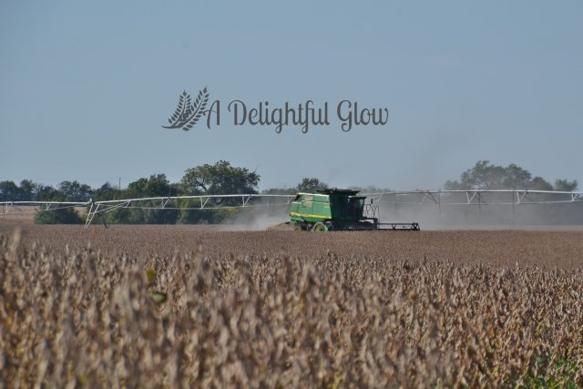 soybean-harvest-2016-6