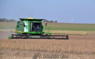 Soybean Harvest 2016