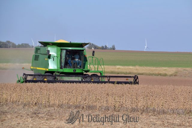 soybean-harvest-2016-8