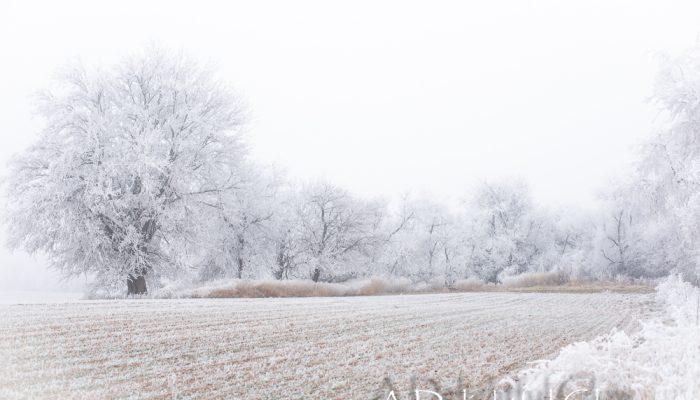 The Wonder in Winter